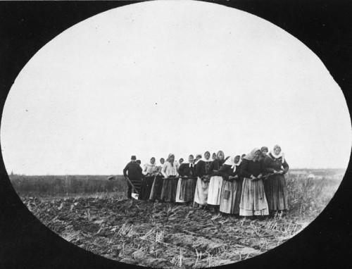 Doukhobor women pulling plough. Source: Wikipedia