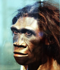 Homo erectus female reconstruction. Photo from Smithsonian.